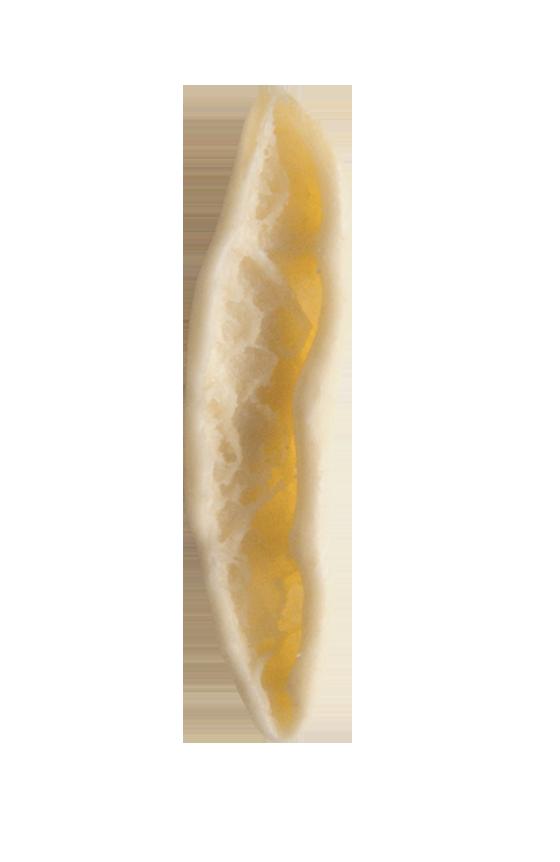 Cortecce